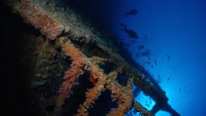 diving-the-red-sea-5