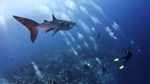 diving-tubbataha-reef-3