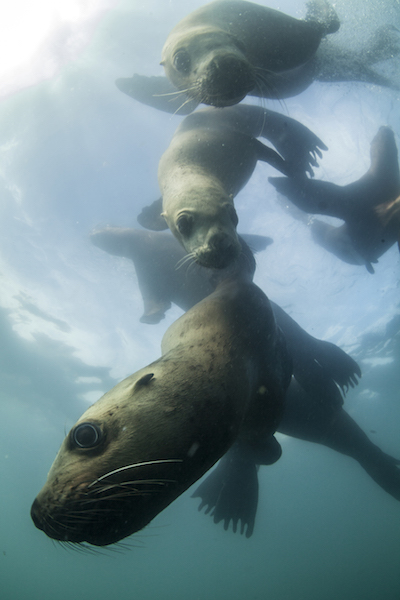"""The first experience was in South Africa, where I trained my skills on various sharks and sea lions. © Mike Korostelev"