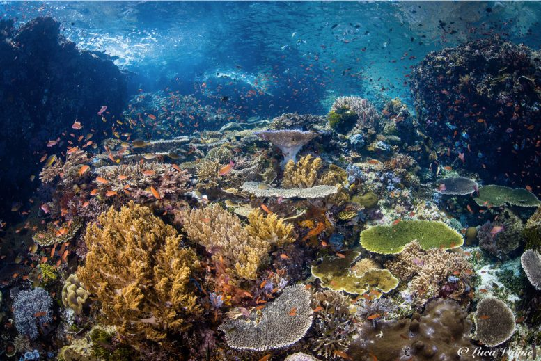 Beautifully capturing the colourful chaos of Komodo reefs © Luca Vaime