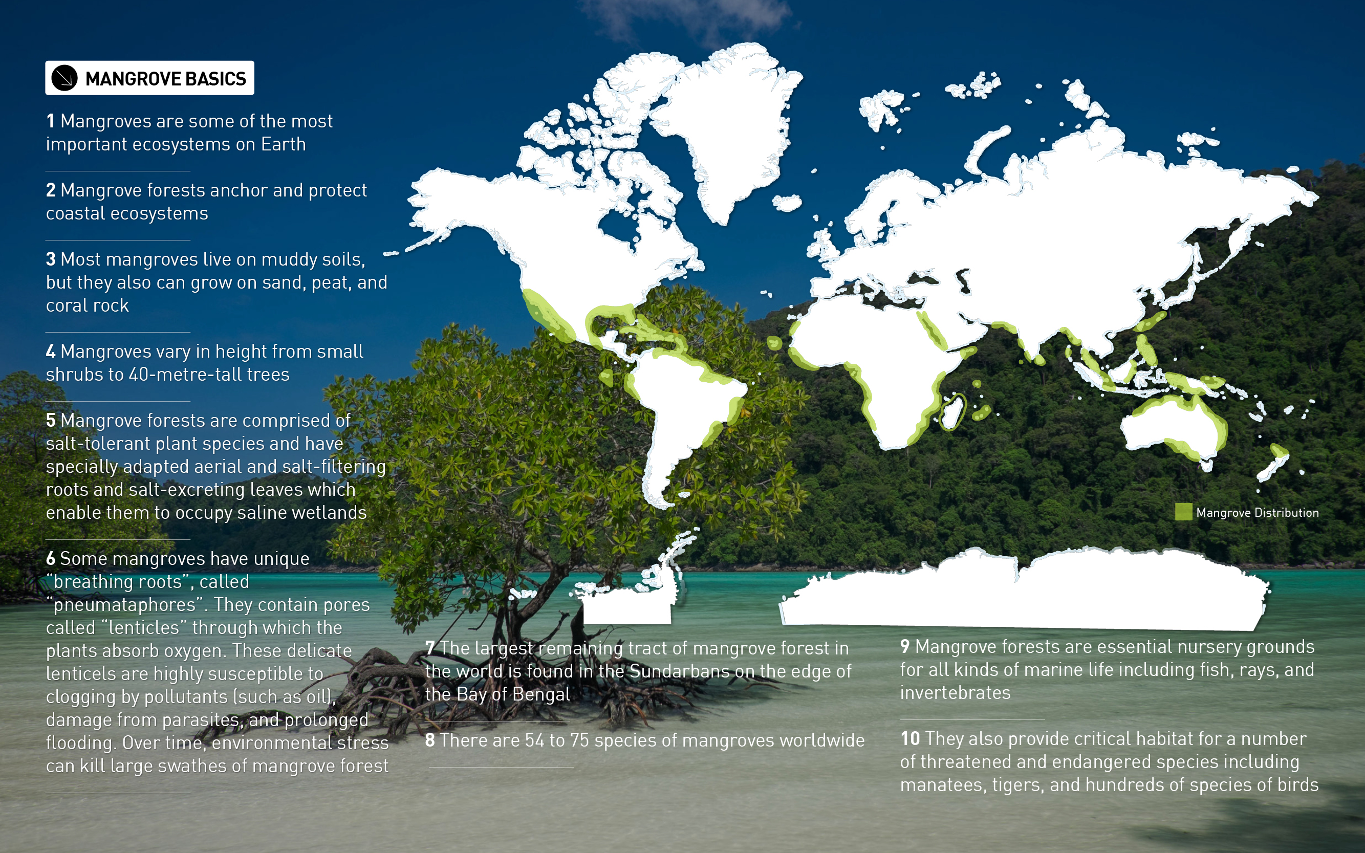 mangroves basics