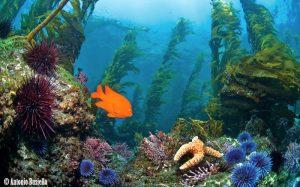 underwater california
