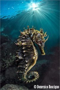sea horse beauty