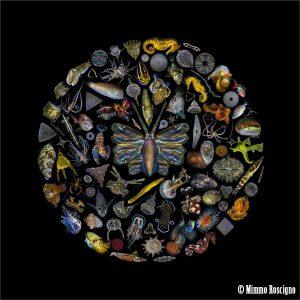 marine life circle