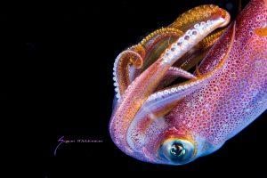 squid cool