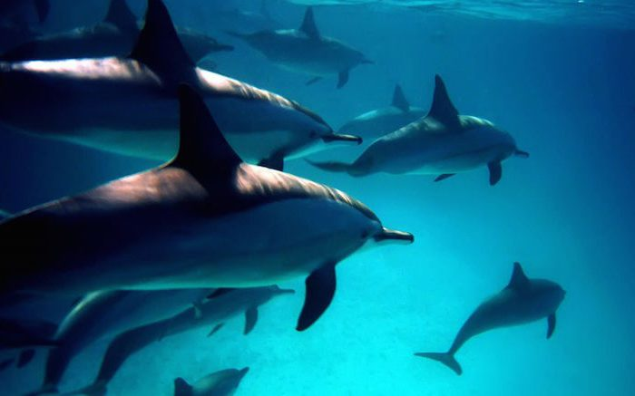 Top 11 spots to dive with dolphins