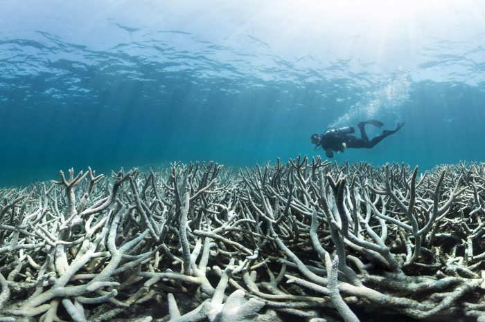 Welcome to the Longest Coral Bleaching Event in History