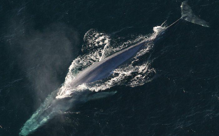Sixth Mass Extinction To Kill Large Marine Animals First