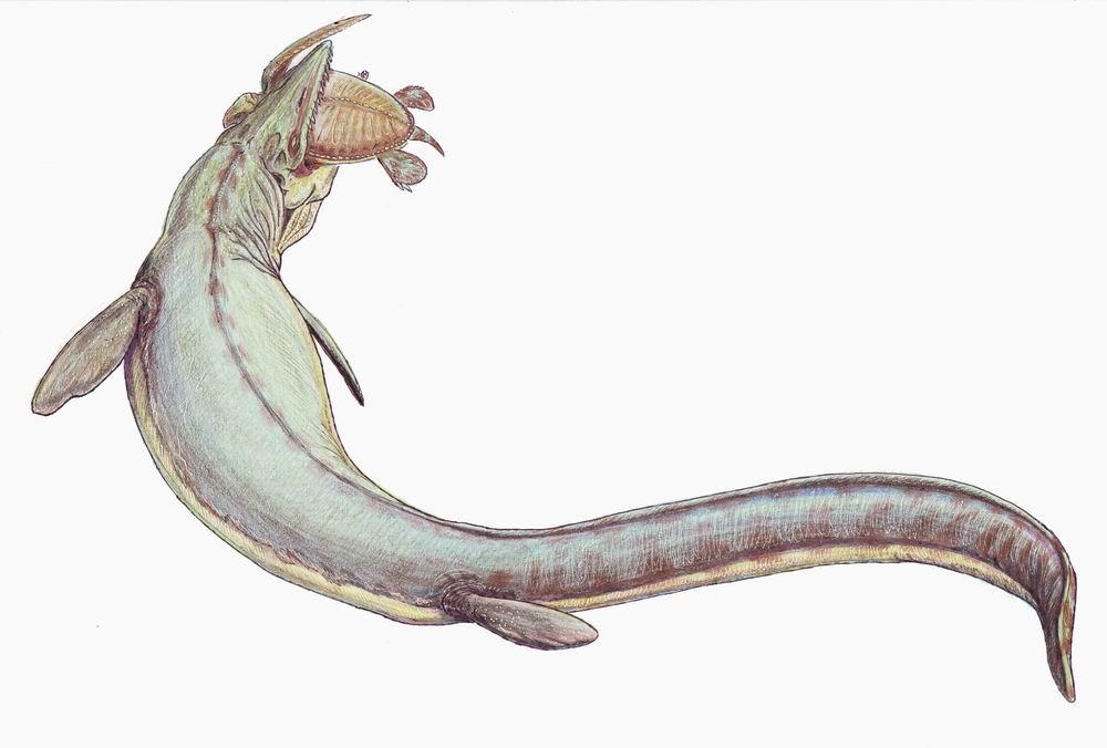 Mosasaurus tackling a prehistoric turtle © Wikimedia Commons