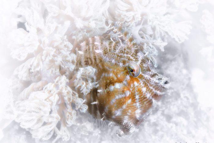 Underwater Photographer of the Week: Andrew Marriott