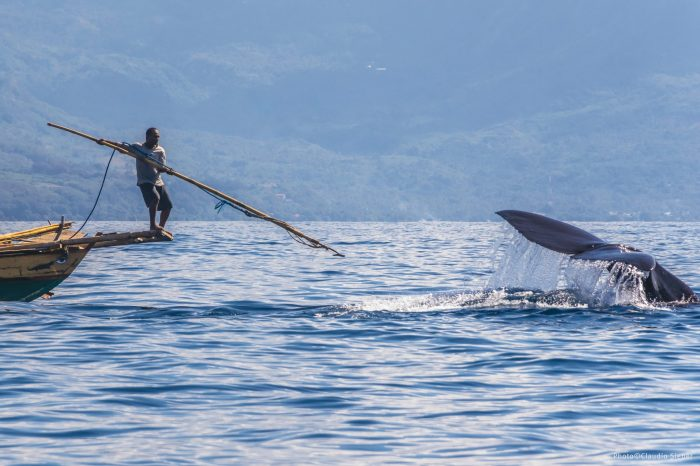 Spearing Whales For Survival: An Inside Look