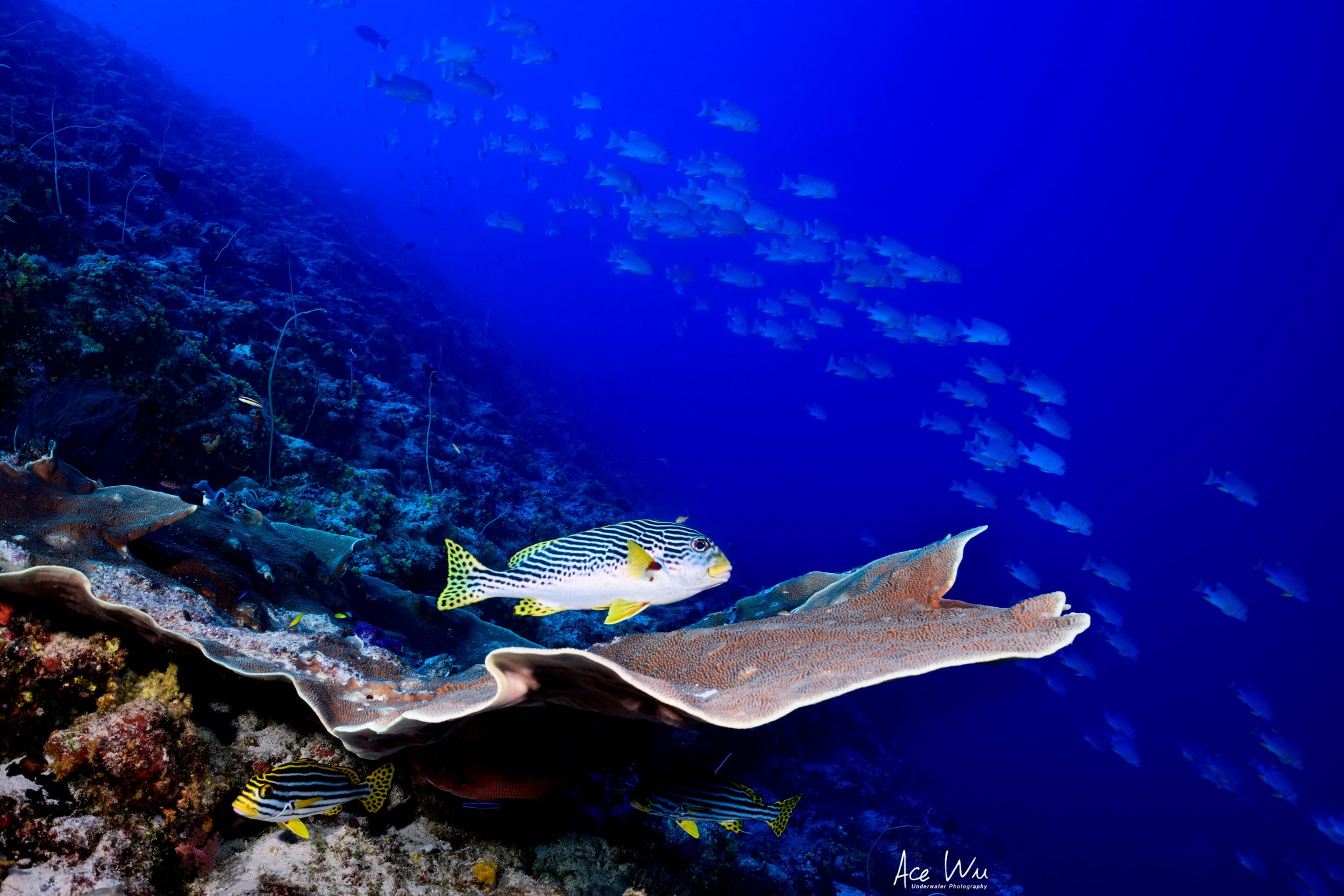 Photo of Palau's rich marine diversity