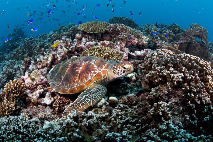 Sumptuous Seychelles
