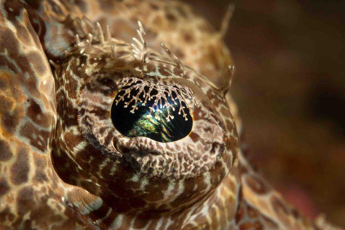Phenomenal Fisheyes