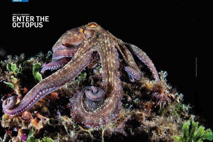 World's Weirdest: Enter the Octopus
