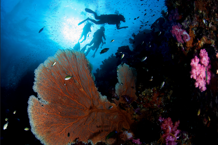 Green Fins Global Hub Development to Boost Industry Protection of Reefs