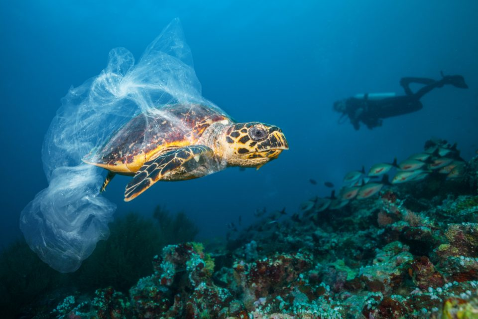 A turtle being trapped by a plastic bag