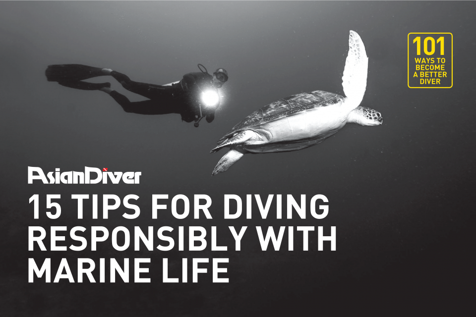 15 Tips for Diving Responsibly with Marine Life