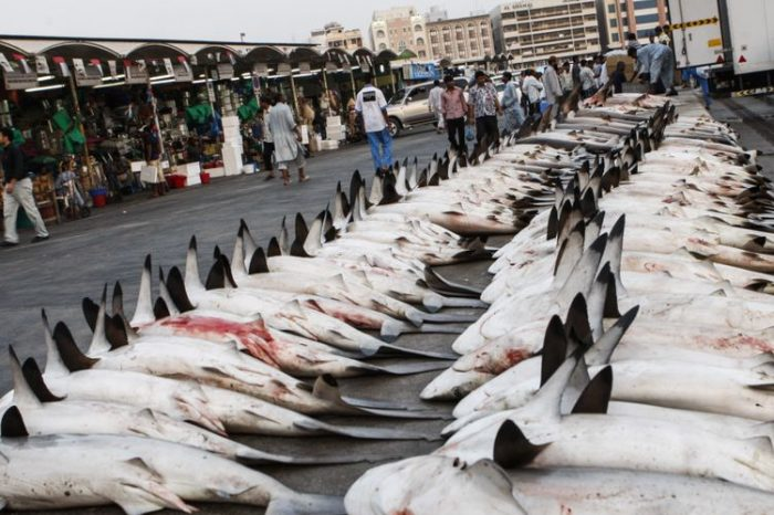 Sharks are banned from all menus in the United Arab Emirates