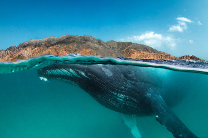 The 3 How-Tos to Photographing Marine Mammals Underwater