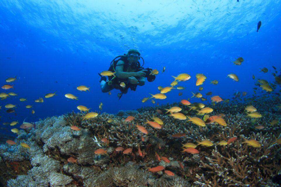 Scuba Divers in Anilao, Philippines