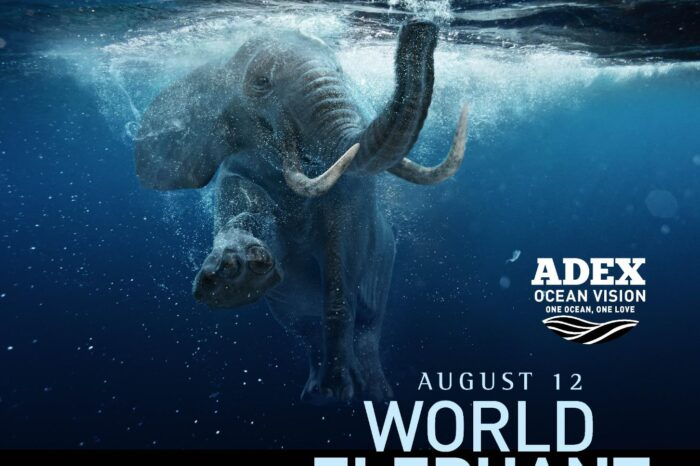 Take a dip into World Elephant Day with Rajan!