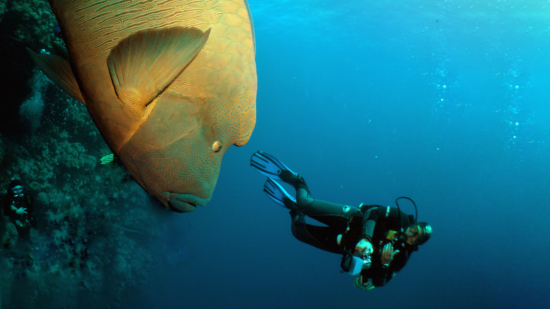 diving-the-red-sea-1