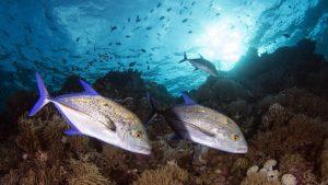 diving-tubbataha-reef-4