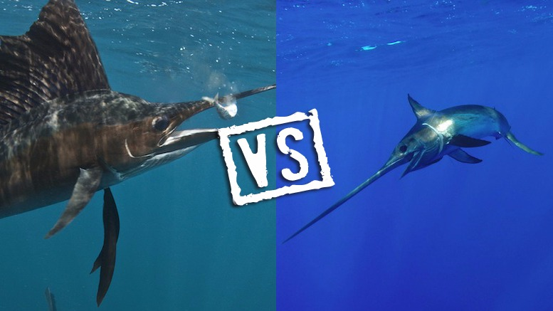 6 differences between sailfish and swordfish underwater360