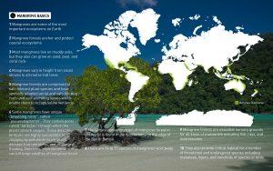 mangrove forests basics