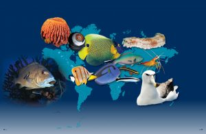 species that clean