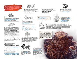 sponges infographics
