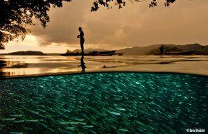 Papua fishing, Papua diving