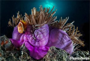 corals and clowns