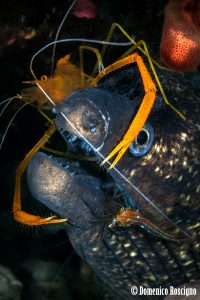 fish under attack parasite