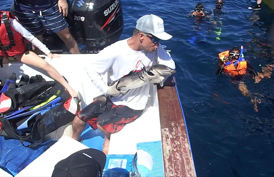 shark fish release