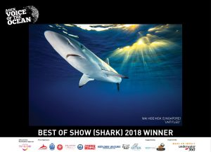 ADEX 2018, Voice of the Ocean, Underwater Photography, Shark
