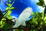 shark-business-diving-lemon-mangrove-bahamas-shane-gross copy