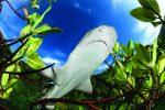shark-business-diving-lemon-mangrove-bahamas-shane-gross copy