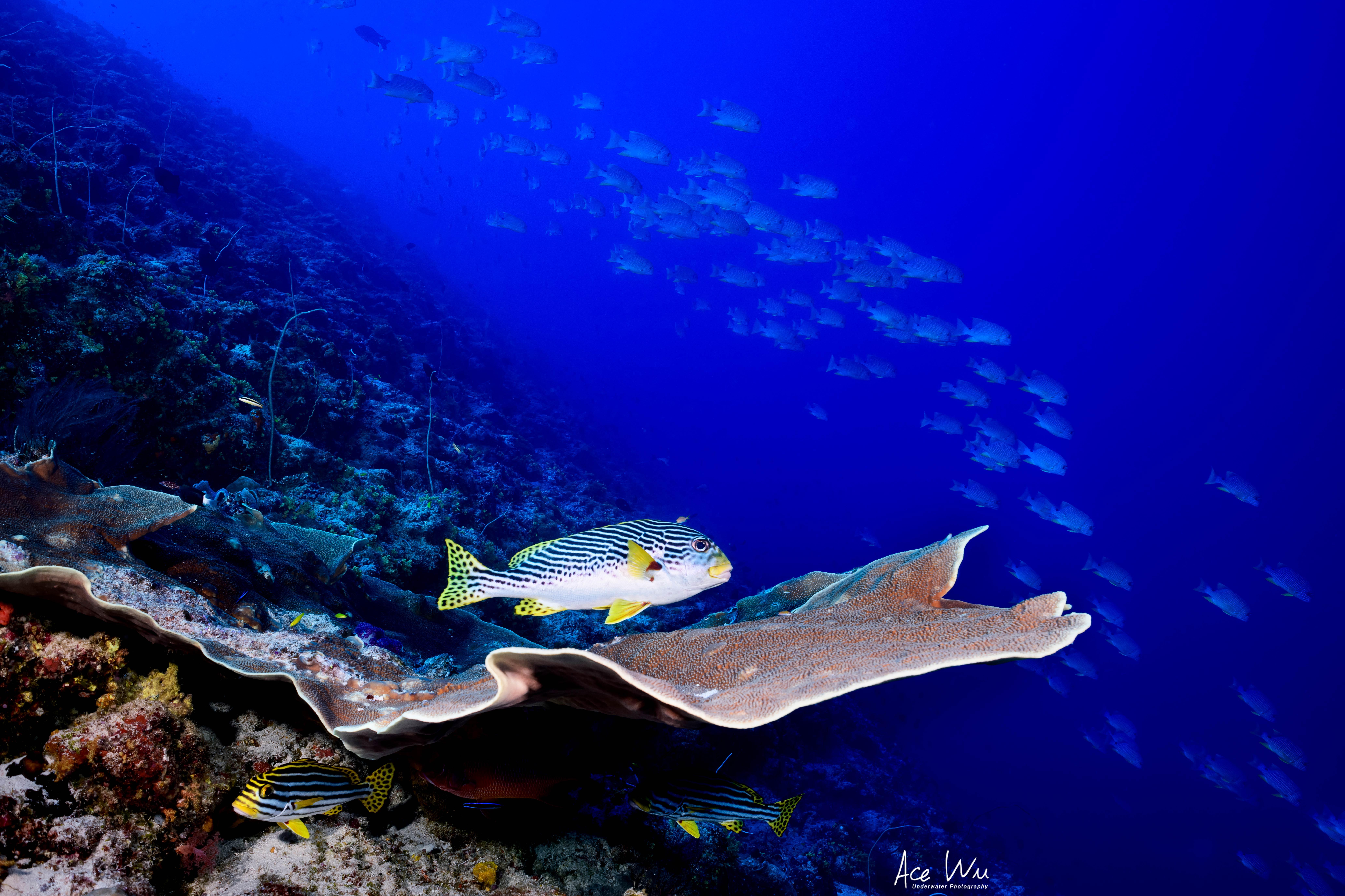 Photo of Palau's rich marine diversity