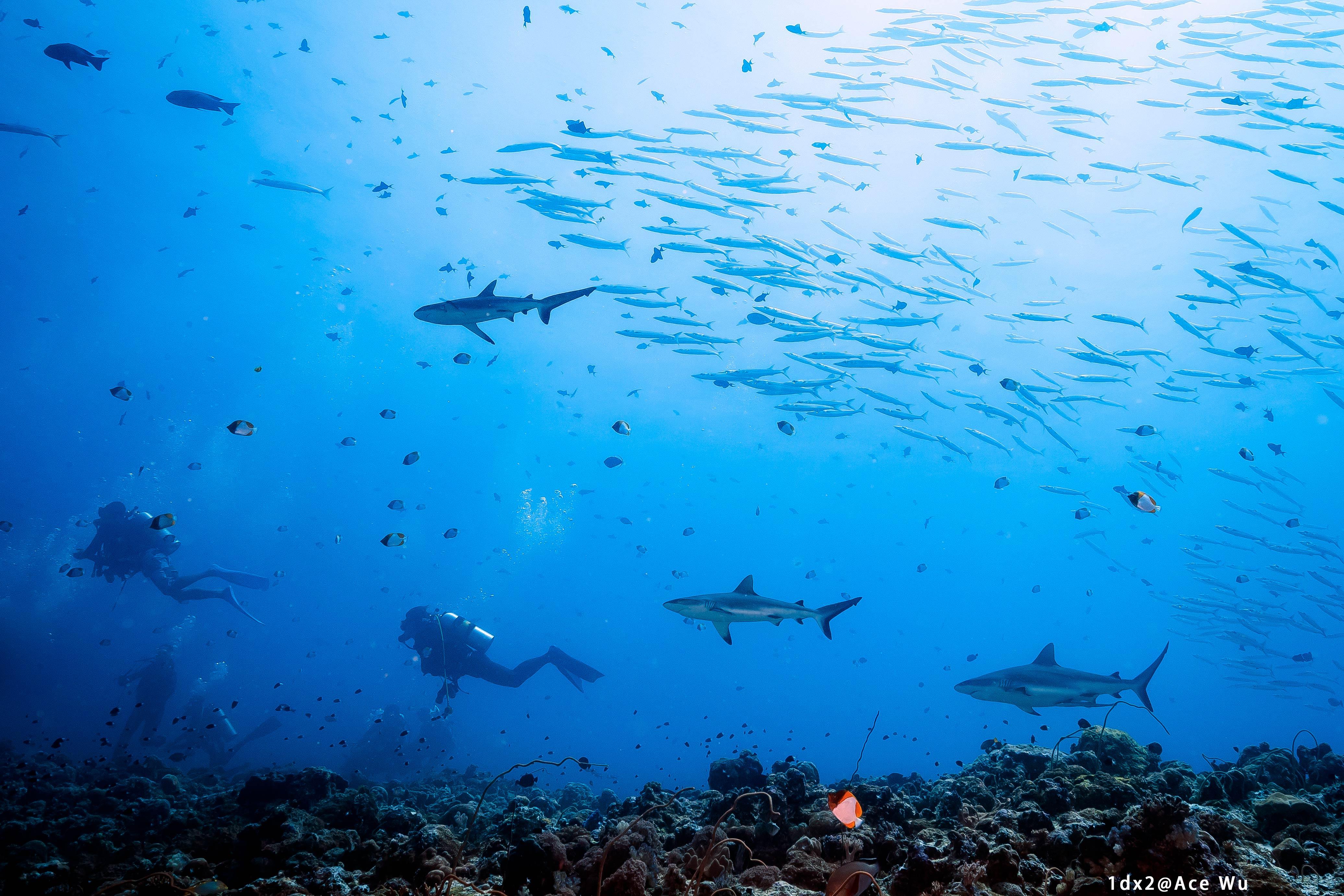 Palau's underwater seascape