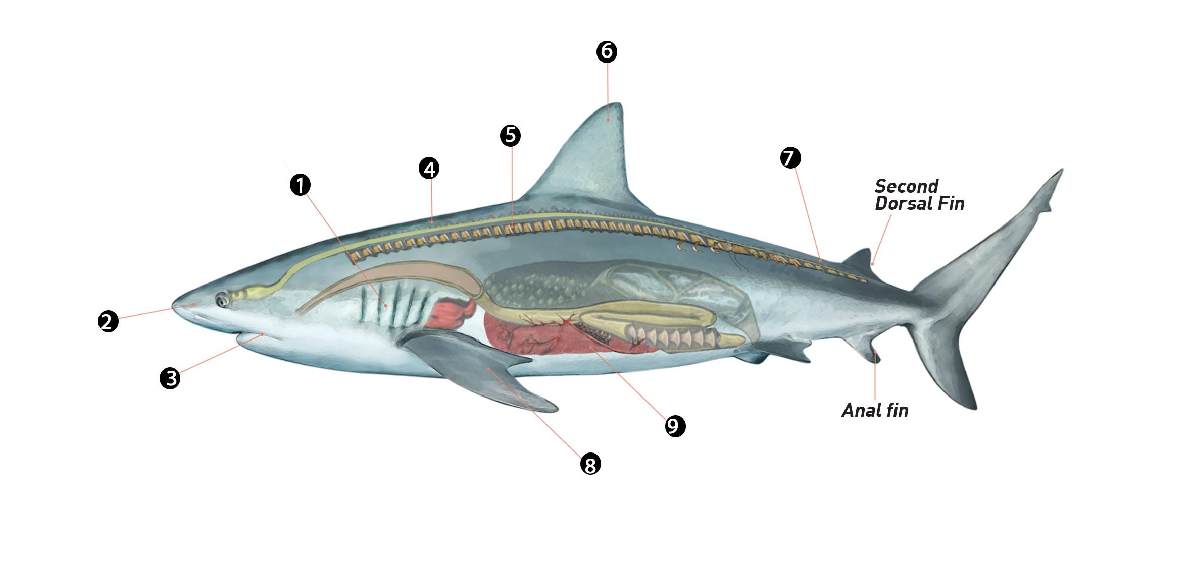 What Makes A Shark A Shark Underwater360