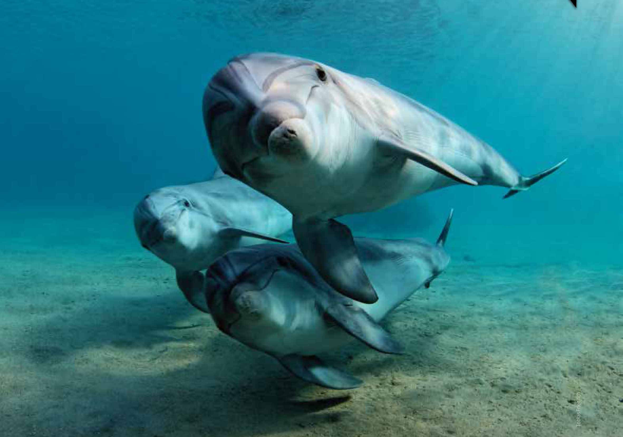 ... are the most familiar dolphins due to the wide exposure they receive in  captivity in marine parks and dolphinaria and in movies and television ...