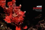 A red frogfish sits well camouflaged, its flamboyant colouring a way for it to mimic the corals within its habitat